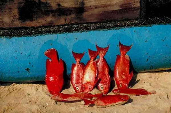 Kreta-essen in Die Küche der Mittelmeerinsel Kreta